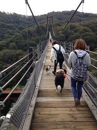 吊り橋渡る.jpg